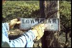 Low Gear sign at the start line of Repack. Hand of Joe Breeze. Circa 1976 or 77.